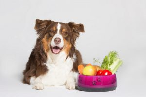 barfberatung-ruhhammer-übergewichtige-hunde