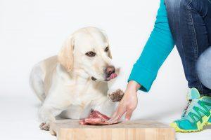 barfberatung-ruhhammer-futterplan-erwachsener-hund